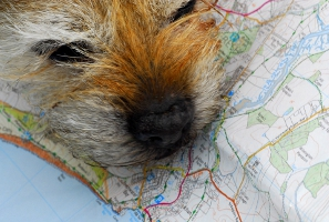 dog with map by danny chapman